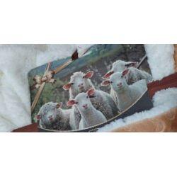 Как правильно ухаживать за овчиной