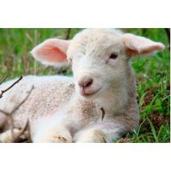 Особенности жилеток из овчины